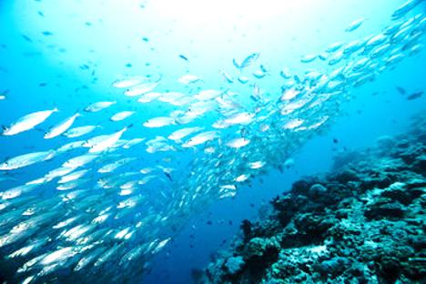 filière restauration poissons